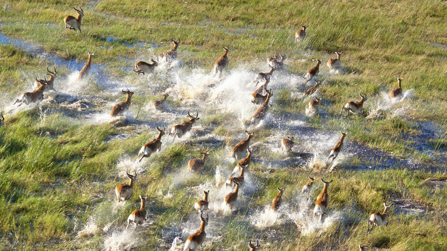 Impressions de Voyage de Nancy – Fly-in Botswana, Juillet 2017