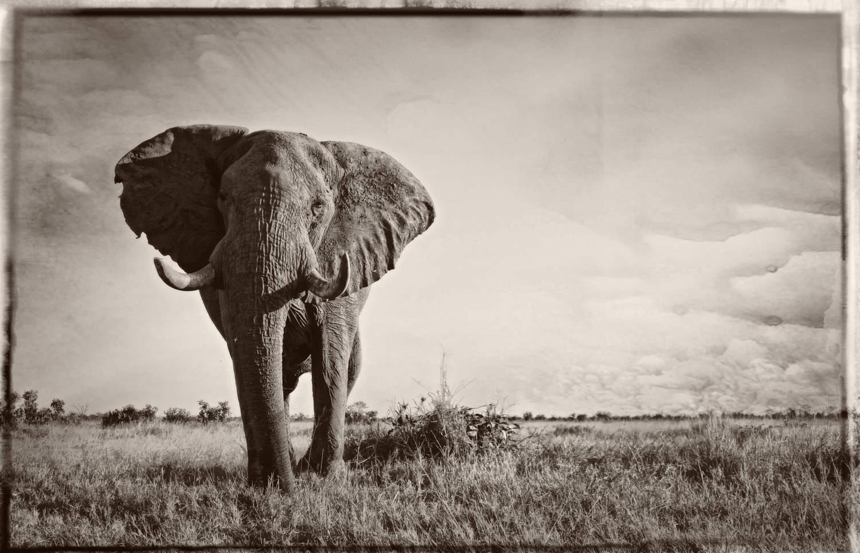 Impressions de voyage de Bertrand & sa famille, Safari guidé, Botswana, Mai 2018